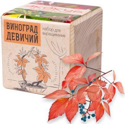 Купить Набор для выращивания ЭКОКУБ Виноград Девичий ECB-01-16, унисекс, Игровые наборы Юный мастер