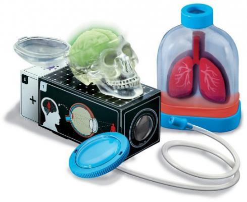 Игровой набор 4m Юный врач. Анатомия человека 00-03374 4m юный врач скелет человека 00 03375