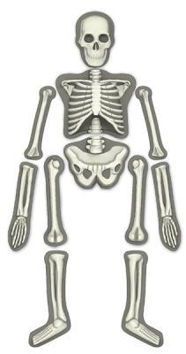 Игровой набор 4m Юный врач. Скелет человека 00-03375 4m юный врач скелет человека 00 03375