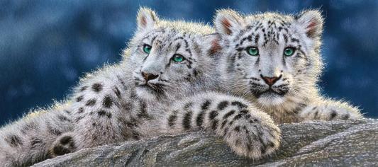 Купить Пазл Кастор Снежные леопарды 600 элементов, Пазлы-картины