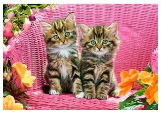 Купить Пазлы 1000 Котята на стуле, Кастор, Пазлы-картины