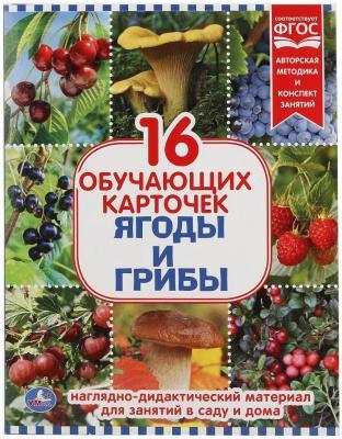 Купить Карточки в папке Умка Ягоды и грибы, Обучающие материалы для детей