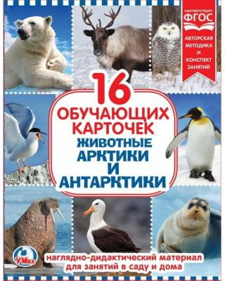 Карточки в папке Умка Животные Арктики и Антарктики астахова н ред сост животный мир арктики и антарктики 72 карточки для игры мемори и викторины