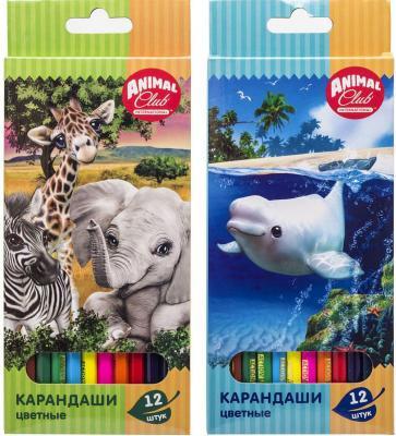 Набор карандашей цветных ACTION! Animal Club, 12цв., европодвес набор карандашей цветных kin животные 12цв