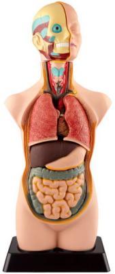 Купить Набор EDU-TOYS MK050 Анатомический набор, унисекс, Игровые наборы Юный мастер