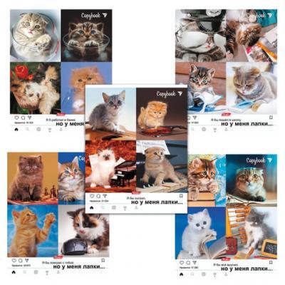 Тетрадь общая Hatber Но у меня лапки-3 48 листов клетка скрепка тетрадь общая action hello kitty hko an 4801 5 3 48 листов клетка скрепка в ассортименте
