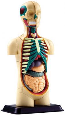 Набор EDU-TOYS SK008 Анатомический (тело) наборы для творчества edu toys творческий набор динозавр