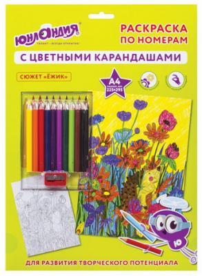 Раскраска по номерам А4, ЮНЛАНДИЯ ЕЖИК, С ЦВЕТНЫМИ КАРАНДАШАМИ, на картоне, 661608
