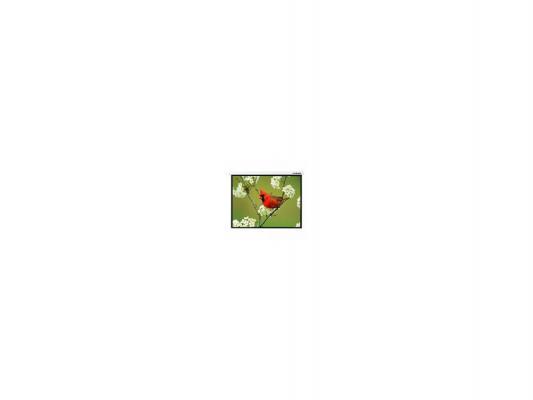 Фото - Экран настенный Lumien Master Picture 173x200см Matte White LMP-100121 экран настенный lumien lmp 100117 202 x 280 см