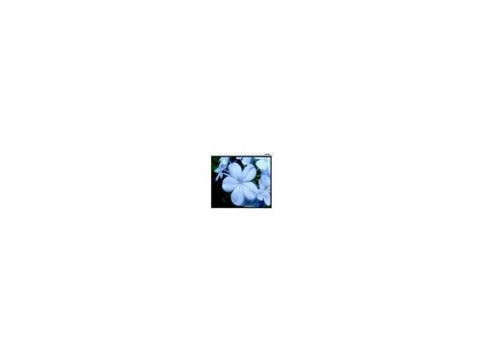 Экран настенный Lumien Master Picture 400 x 259 см LMP-100126 экран переносной на штативе elite screens yard master oms120h2 dual 149 x 266 см