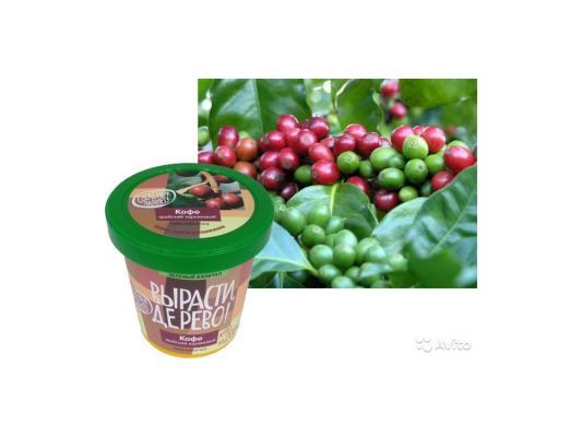Набор для выращивания Зеленый капитал Вырасти, дерево! Кофе арабский от 7 лет zk-012 автомобиль наша игрушка автомаркет красный zya a2689 2