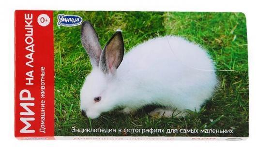 Развивающие карточки Умница Мир на ладошке Домашние животные 2017 умница профессии городские службы