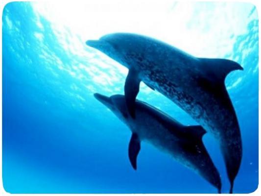 Коврик для мыши Buro BU-M40083 230х180х2мм пластик дельфины