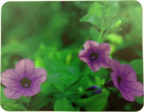 все цены на Коврик для мыши Buro BU-M20012 цветы онлайн