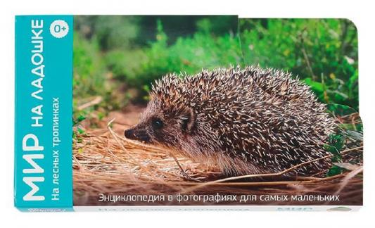 Развивающие карточки Умница Мир на ладошке На лесных тропинках 2011