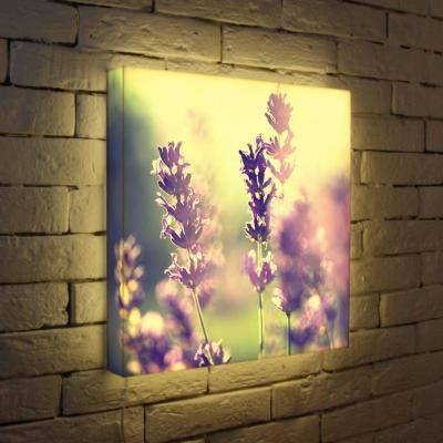 Лайтбокс Полевые цветы 45x45-044