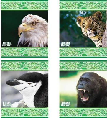 Тетрадь школьная Action! Animal Planet 48 листов клетка скрепка AP-AN 4804/5 в ассортименте AP-AN 4804/5