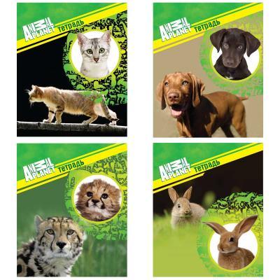 Тетрадь общая Action! Animal Planet 96 листов клетка скрепка AP-AN 9603/5 в ассортименте AP-AN 9603/5