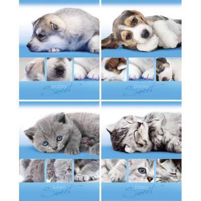 Тетрадь ученическая Би Джи Puppy and Kitten 48 листов клетка скрепка Т5ск48 0847 в ассортименте Т5ск48 0847