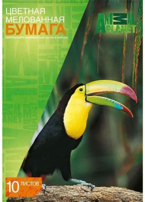 купить Цветная бумага Action! ANIMAL PLANET A4 10 листов AP-CCP-10/10 в ассортименте, мелованная дешево
