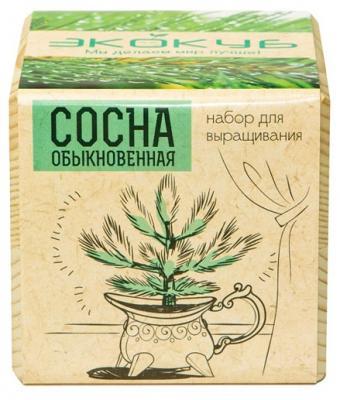 """Набор для выращивания ЭКОКУБ """"Сосна"""" ECB-01-09"""
